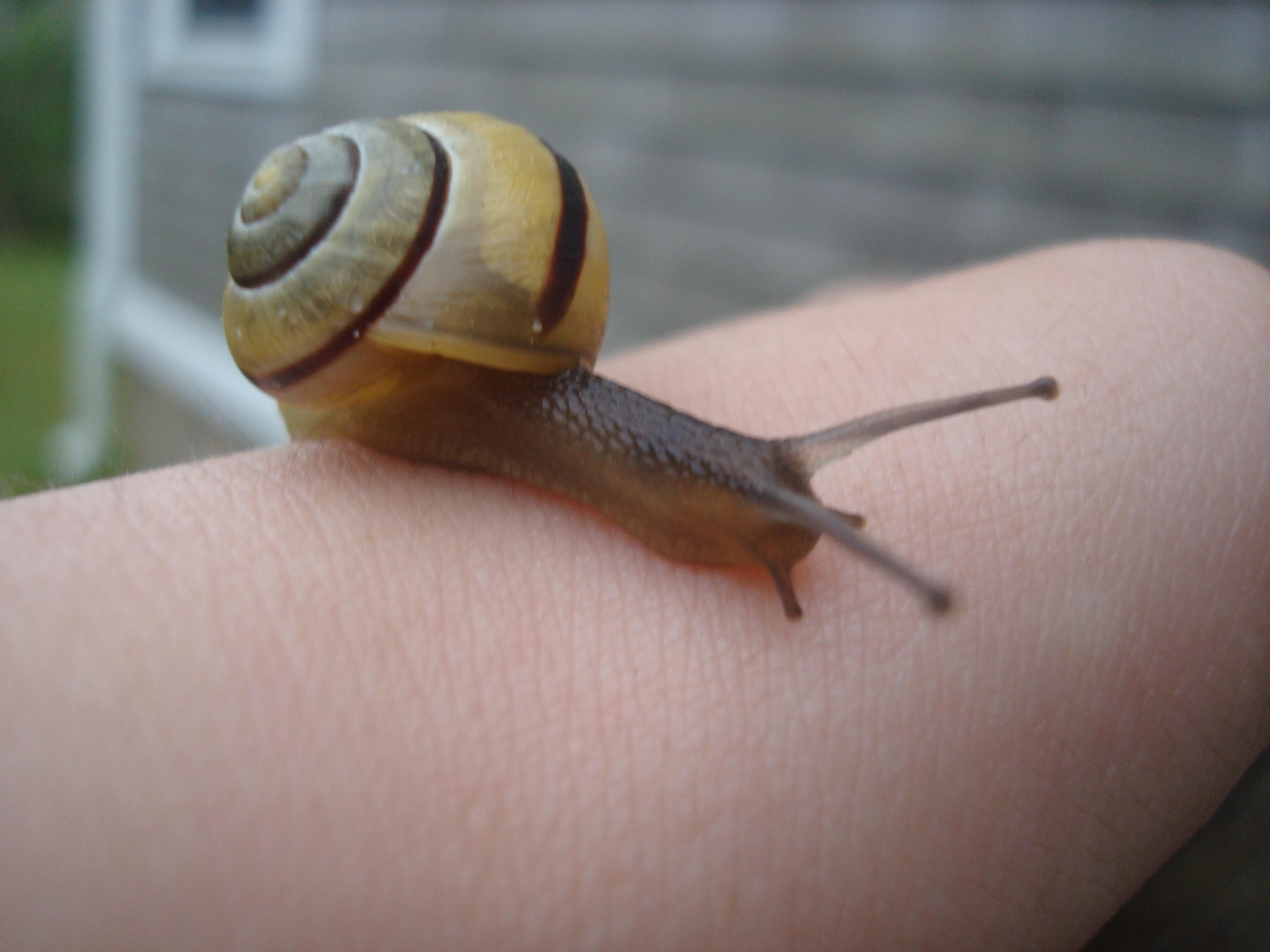 Shelled Friend