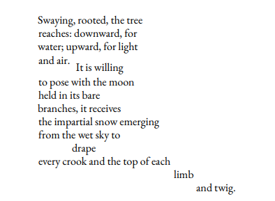 Swaying, rooted, the tree reaches: downward, for water; upward, for light and air. It is willing to pose with the moon held in its bare branches, it receives the impartial snow emerging from the wet sky to drape every crook and the top of each limb and twig.