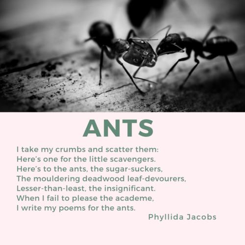 micropoems - renaissance - Ants