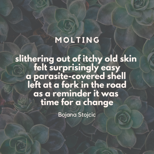 micropoems - renaissance - MOLTING